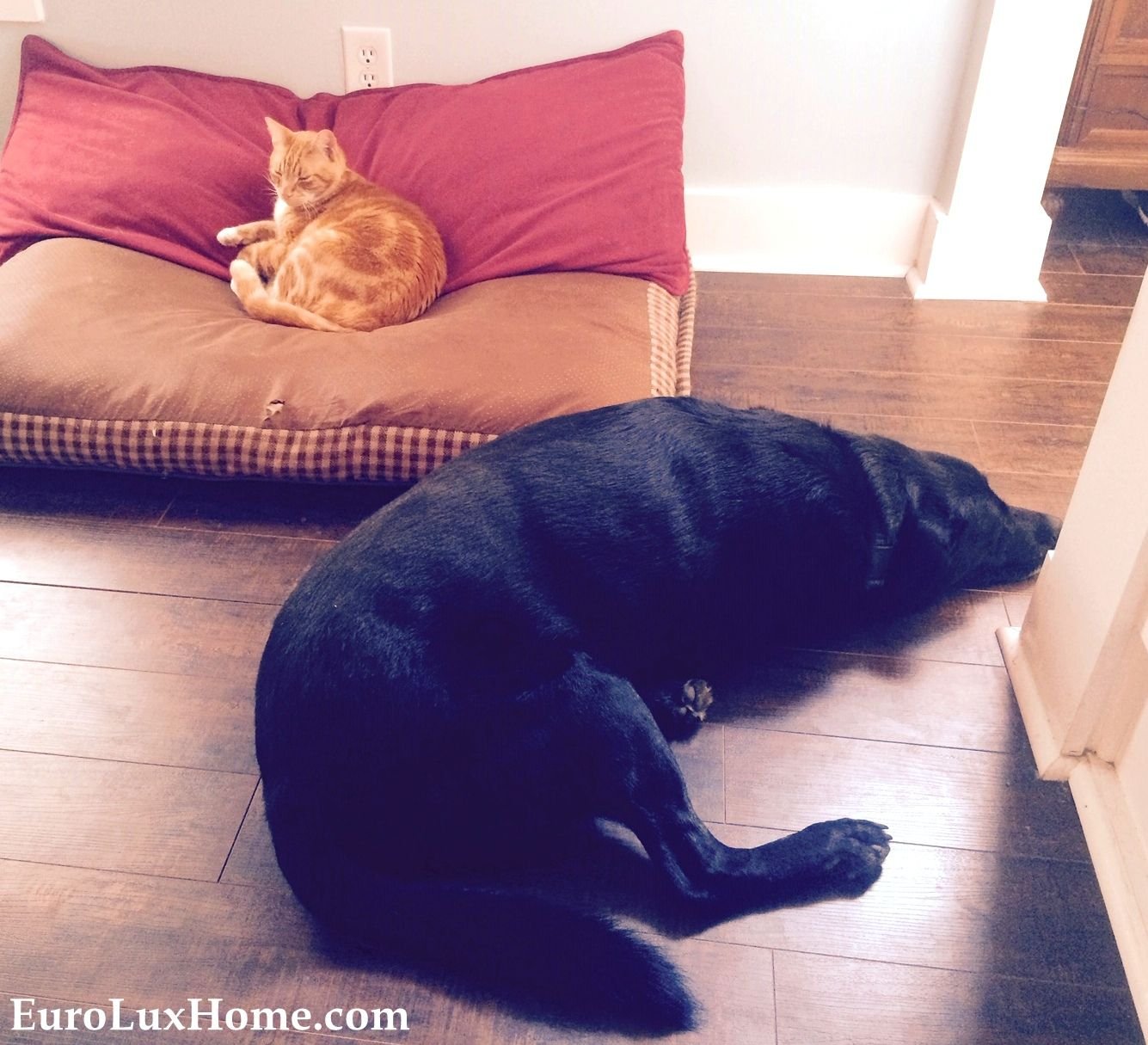 Cats Rule Dogs Drool Furryfriday Cats Dogs Pets Love