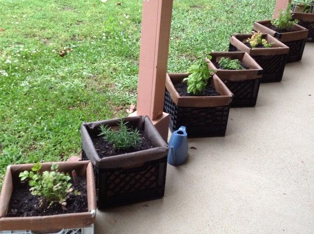 clever idea from reader blanca planting in milk crates