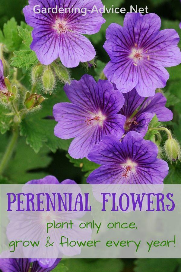 Perennial Garden Plants Flower Gardening Advice For Colorful