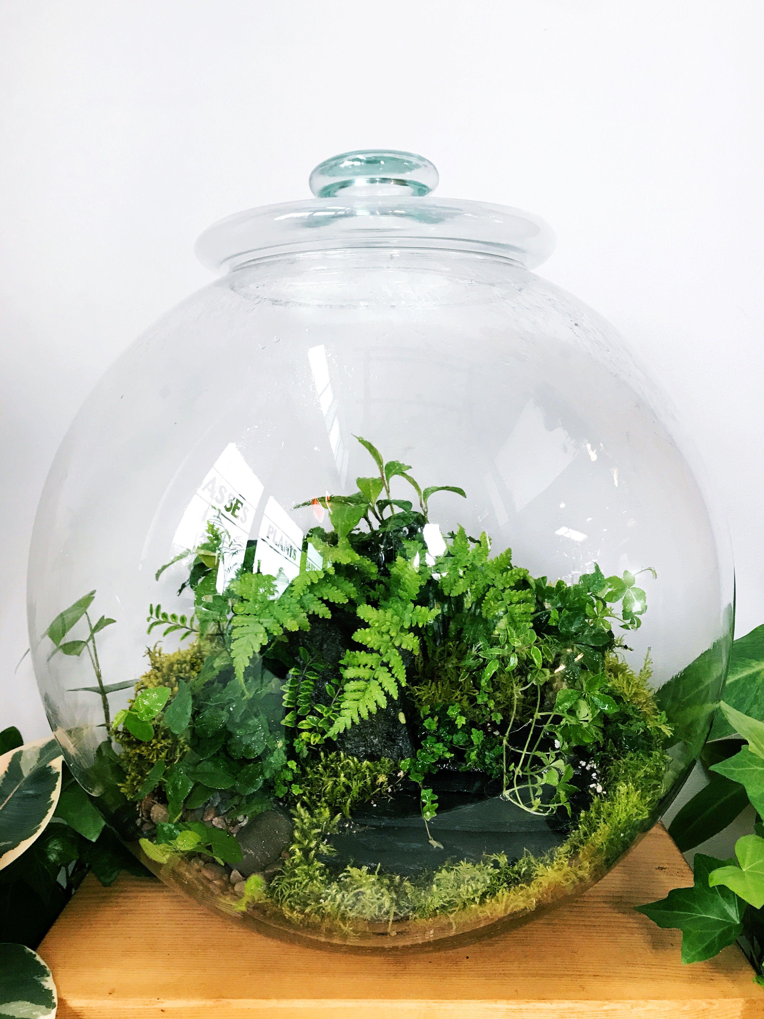 Large Custom Globe Forest Woodland Terrarium Planted With Ficus