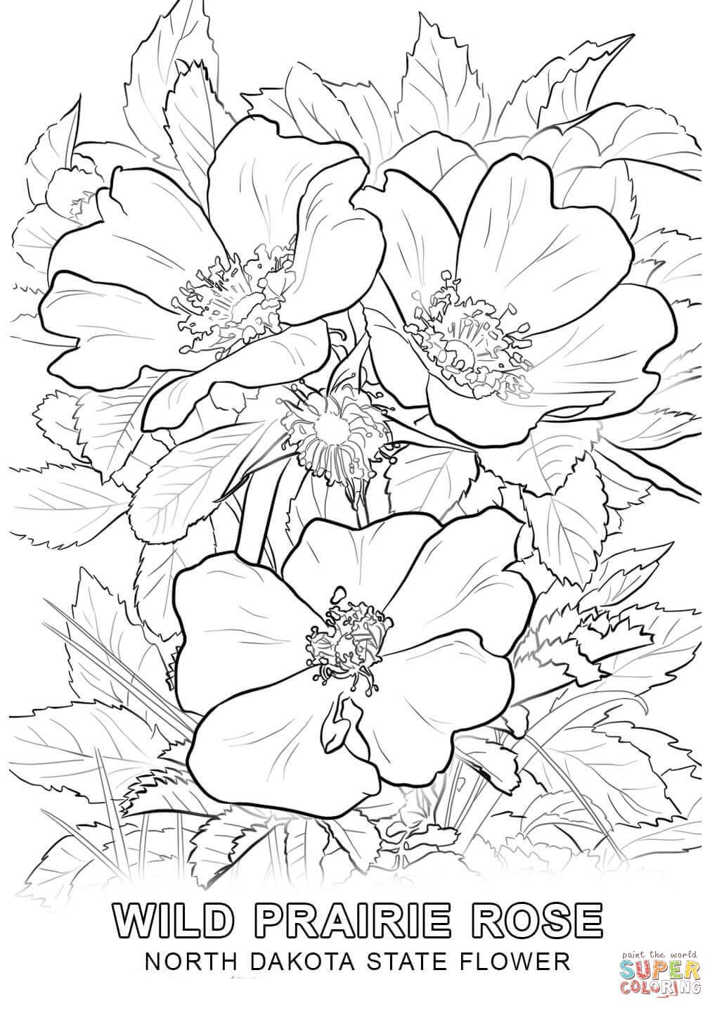 Click The North Dakota State Flower Coloring Pages To View Printable