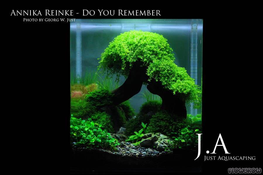 annika reinke aquarium pinterest aquarium garnelen aquarium und wasserpflanzen aquarium. Black Bedroom Furniture Sets. Home Design Ideas