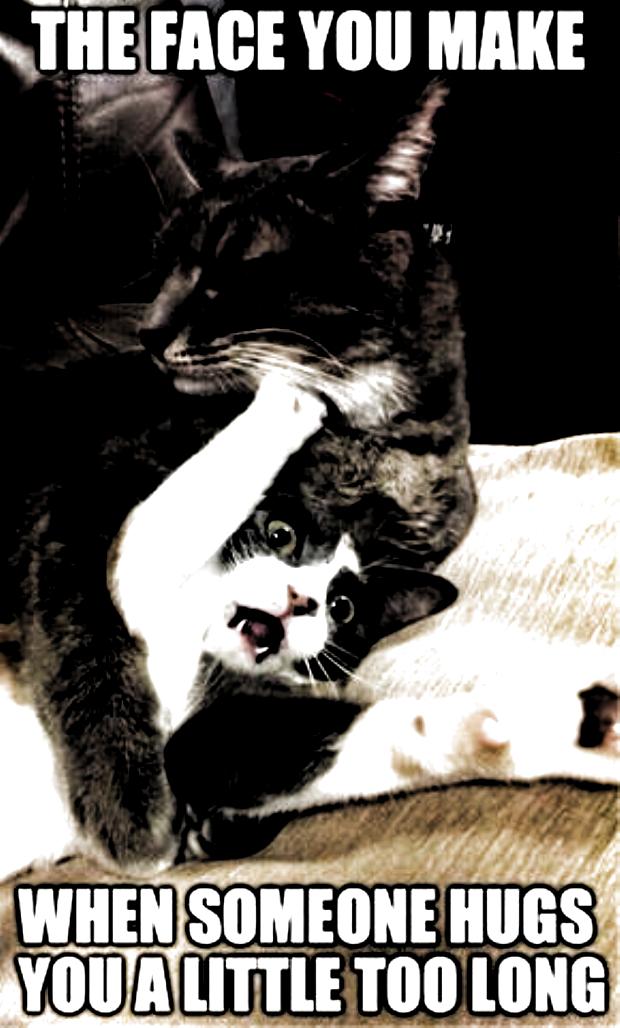 funny cat memes so true / funny cat memes funny cat memes l