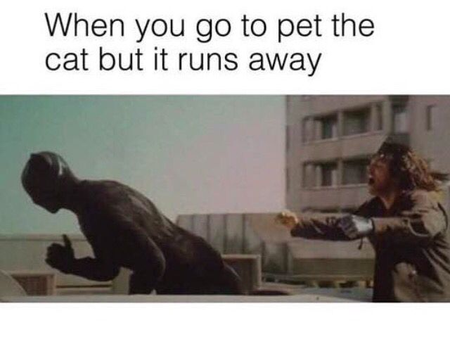 Funny Meme Black Panther : Bucky the winter soldier and t'challa the black panther captain