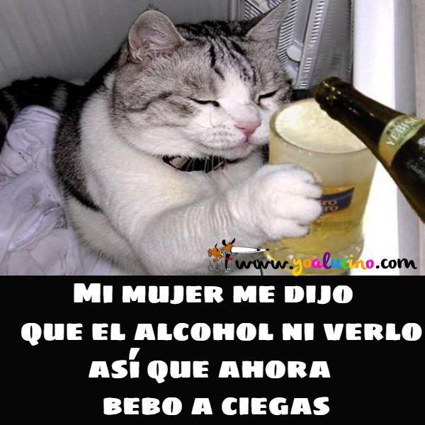 Alcohol A Ciegas Yo Alucino Chistes De Perros Meme Gato Gato Borracho