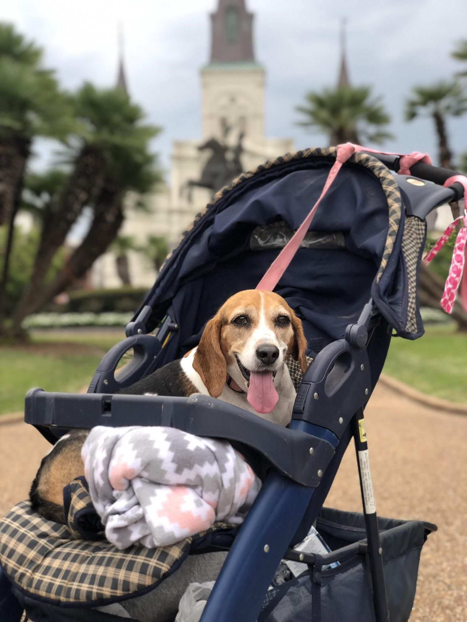 Livin her best life Music IndieArtist Chicago Beagle