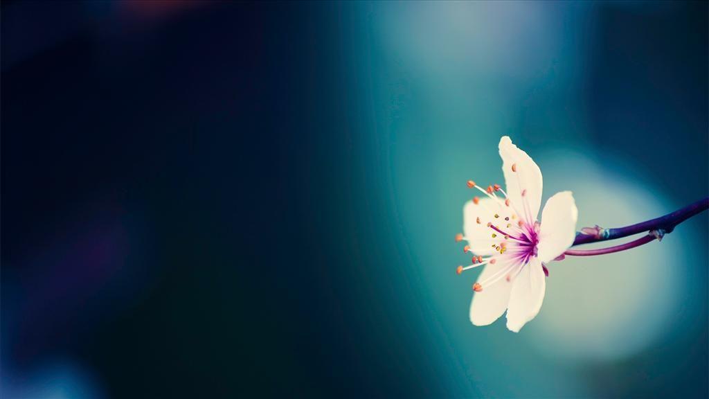 Telecharger Gratuitement Ce Fond D Ecran Fleurs Printemps Papier Peint A Fleurs Image Fleur