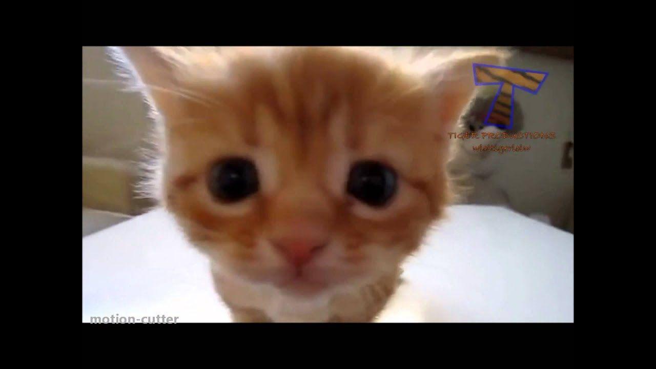 Süße Baby Videos