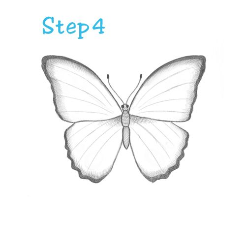 Ageless Guides Step By Step How To Draw A Butterfly How To Draw A Butterfly Step By Step For Kids In 2020 Butterfly Drawing Butterfly Sketch Easy Butterfly Drawing