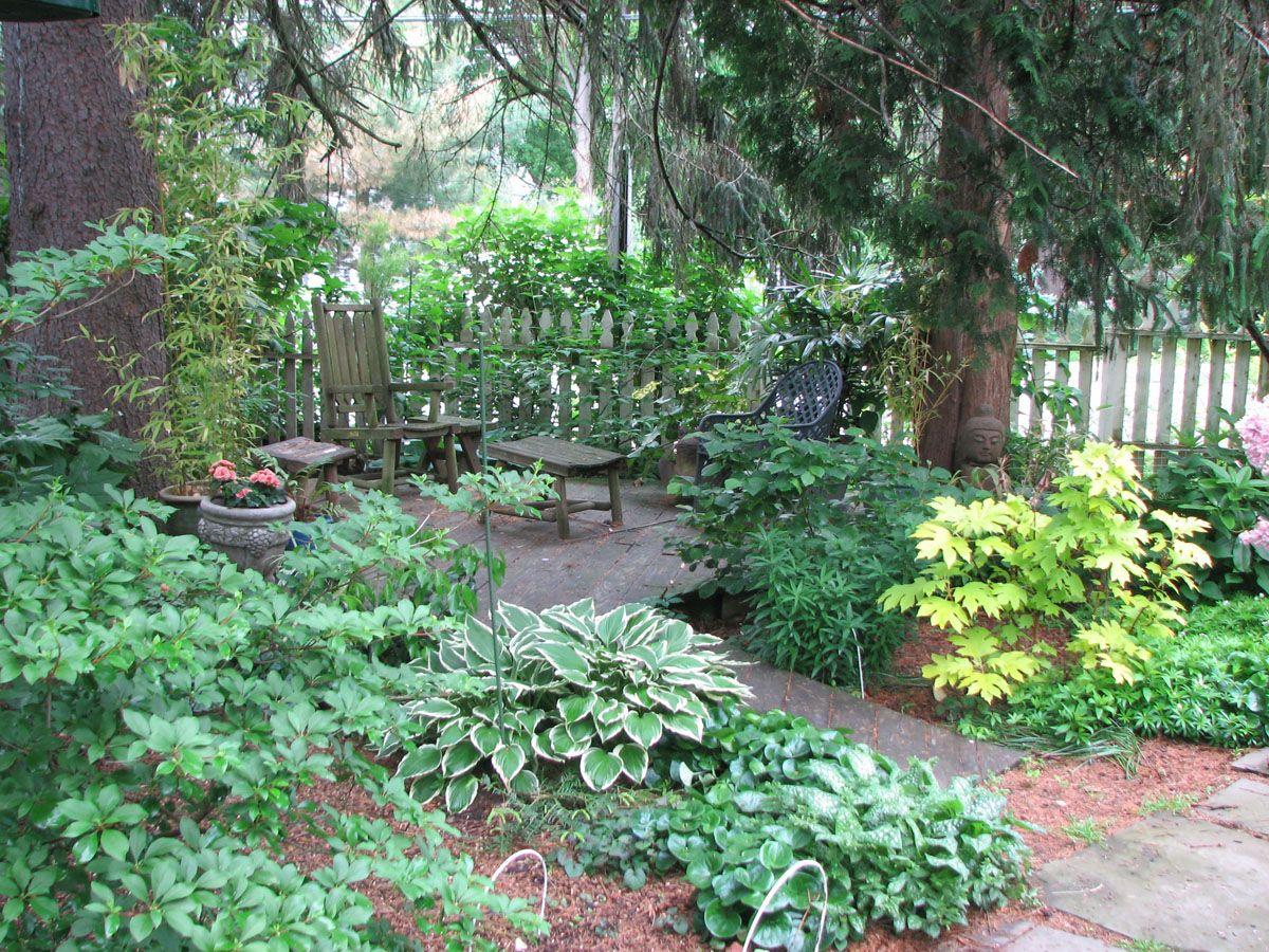 Landscaping Shade Garden Zone 4 - Google Search | Garden ...
