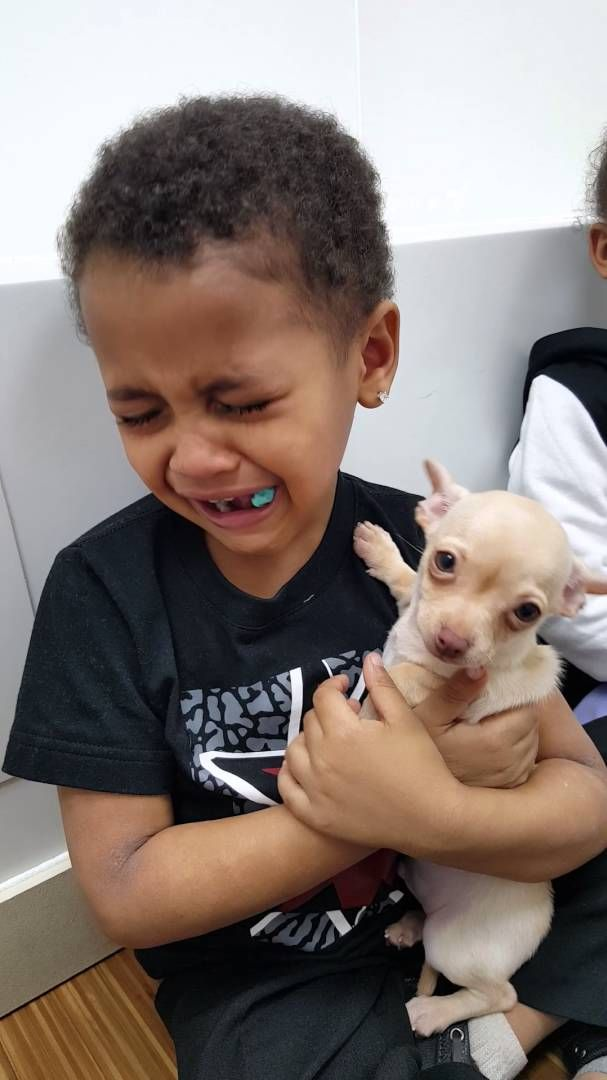Little Boy Cries Over Cute Puppy Cute Puppy Videos Cute Puppies