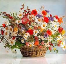 Картинки по запросу полевые цветы фото | Flower painting ...