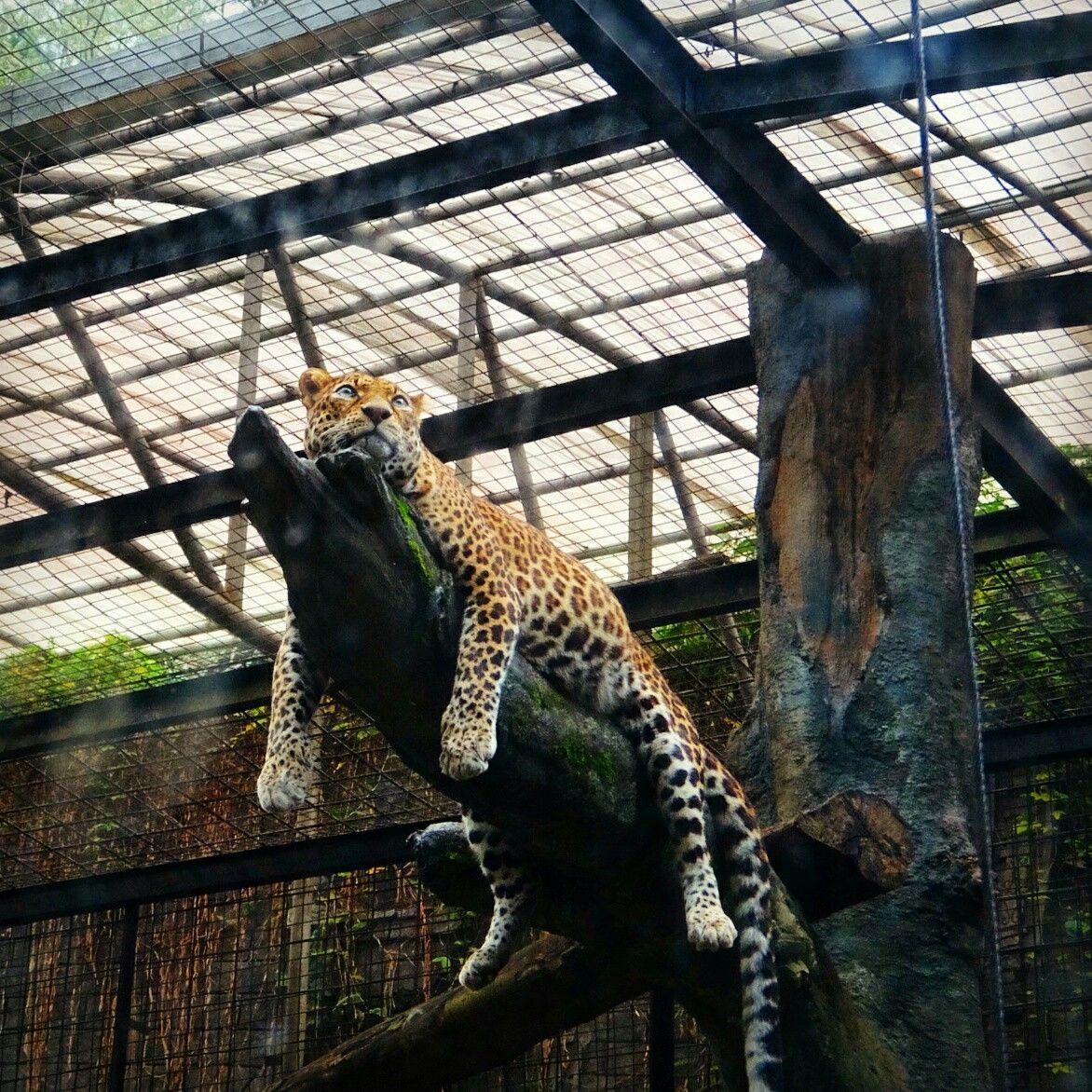 Taman Safari Zoo, Cisarua, Bogor Indonesia, Taman
