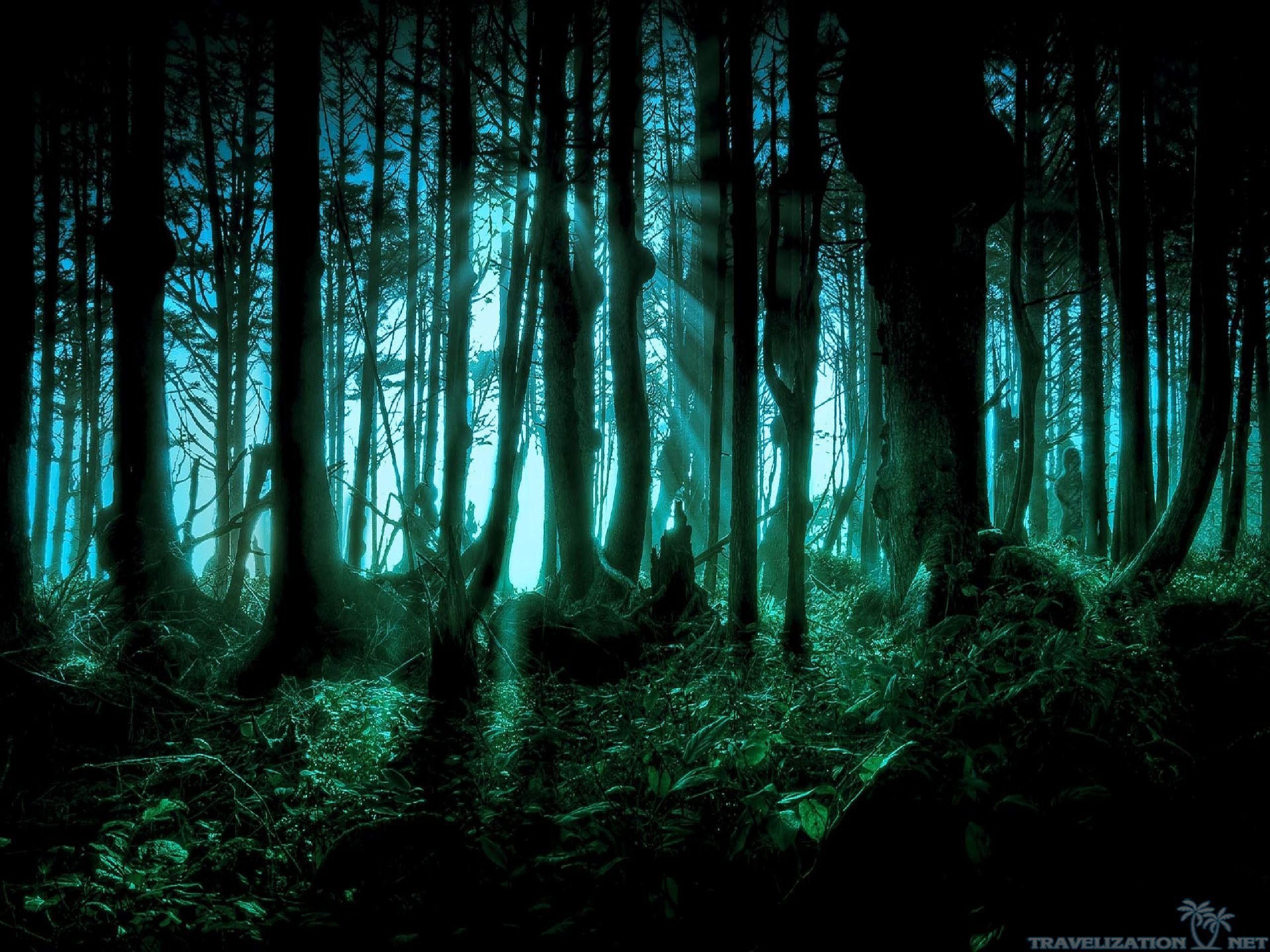 Creepy Forest Wallpapers Background 2560x1920