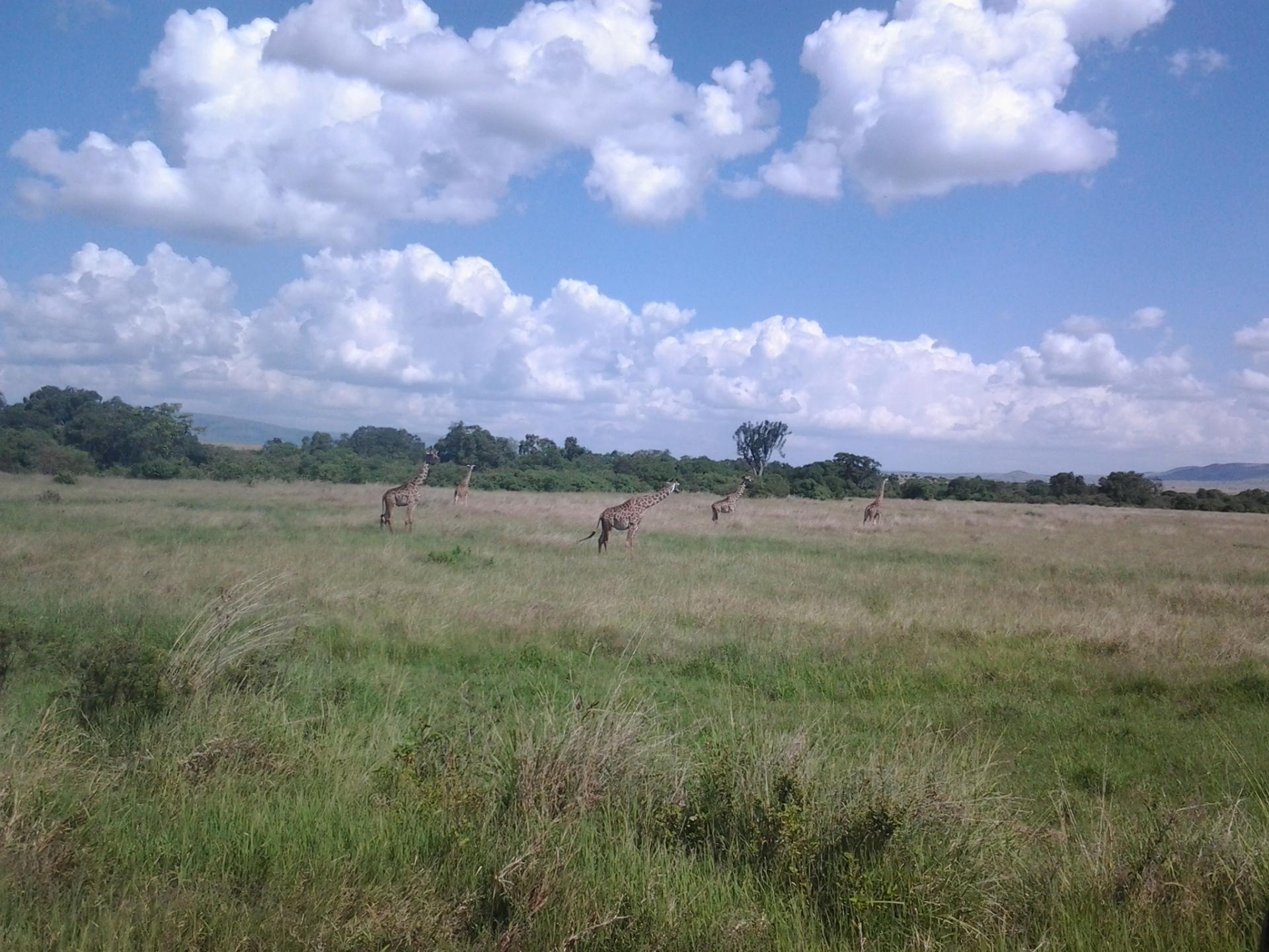 Kenya Tanzania Adventure Budget Camping Safari, YHA Kenya