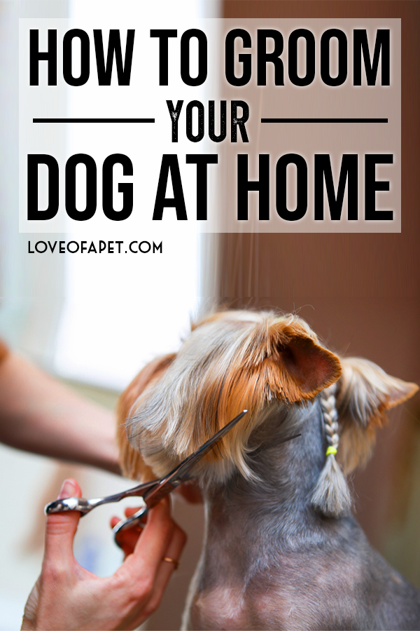 How To Groom Your Dog At Home Dog Grooming Diy Dog Haircuts Puppy Grooming