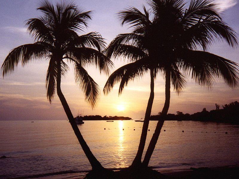 HONEYMOON = paradise in Jamaica!! Woohoo!  :):)