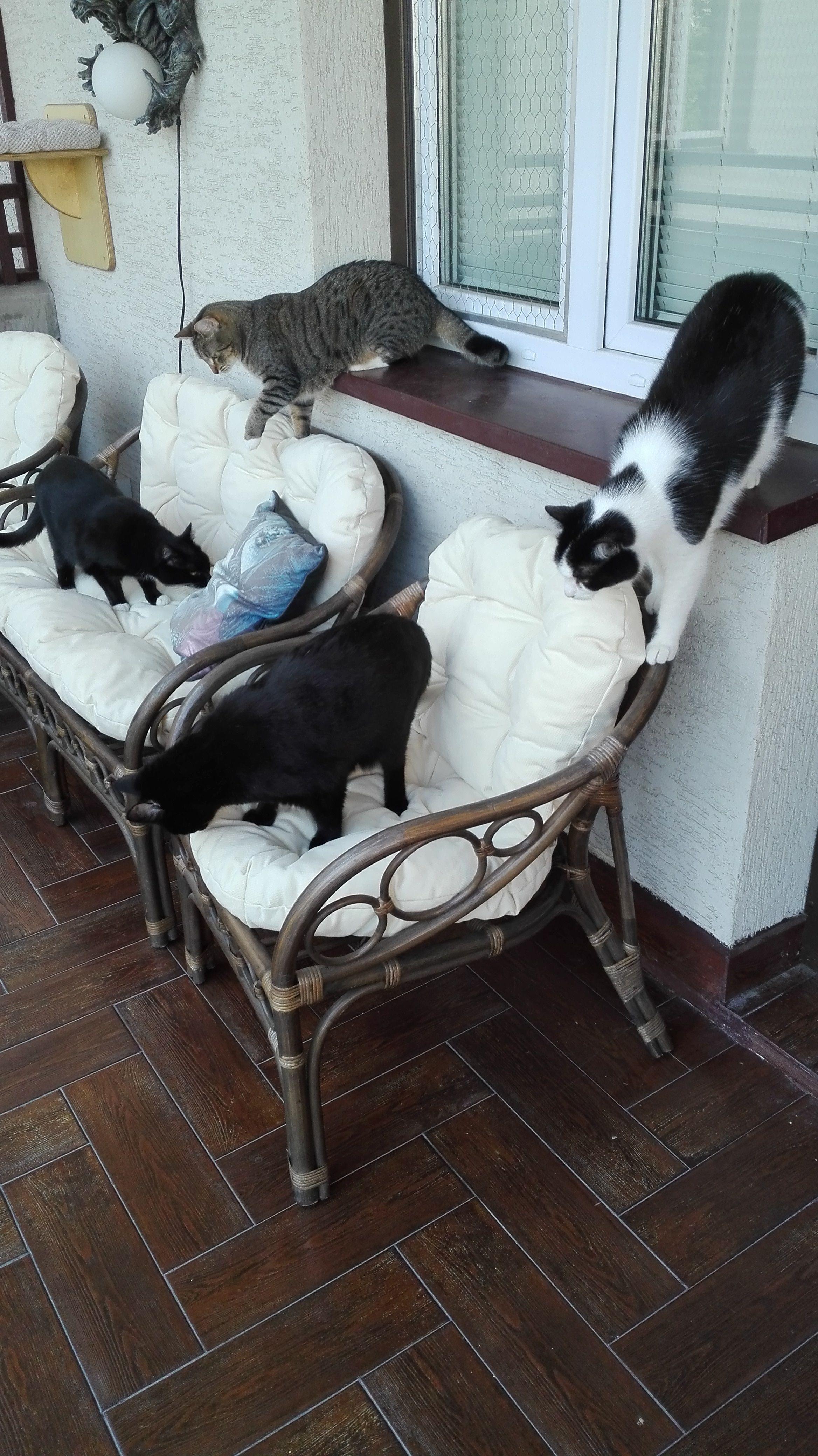 On the balcony: Mascota, Lana, Joker and Myshkin :)