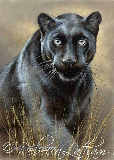 This Is The Completed Painting Of The Black Leopard Titled Dauphin Dessin Animaux A Colorier Peintre Animalier
