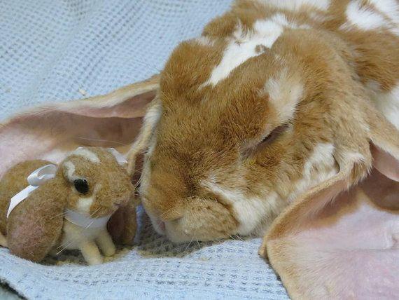 Your Rabbit Custom Pet Rabbit 3d Pet Felted Replica Pet Memorial Needle Felted Rabbit Made To Order Pet Rabbit Pets Pet Memorials