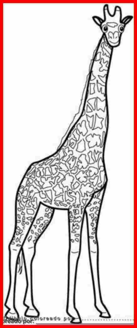 dibujosde jirafas - Buscar con Google | Projectes | Pinterest ...