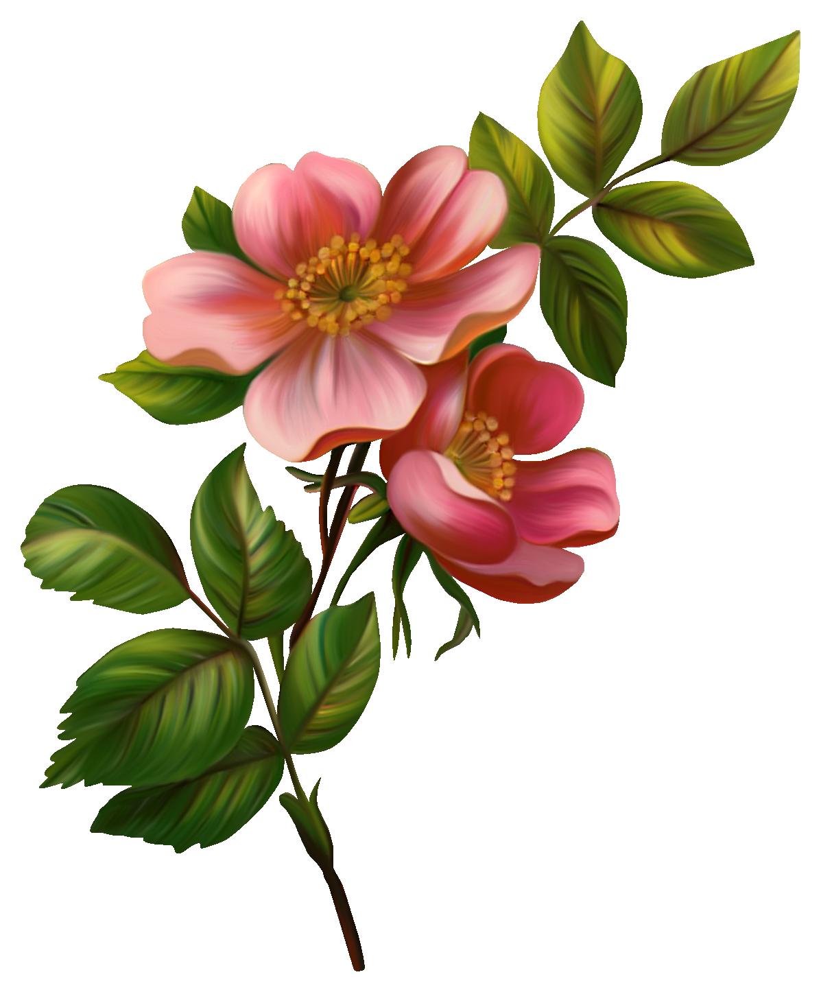 Pin De Blanka Dolinar Em Png: Ilustração Rosa, Rosas