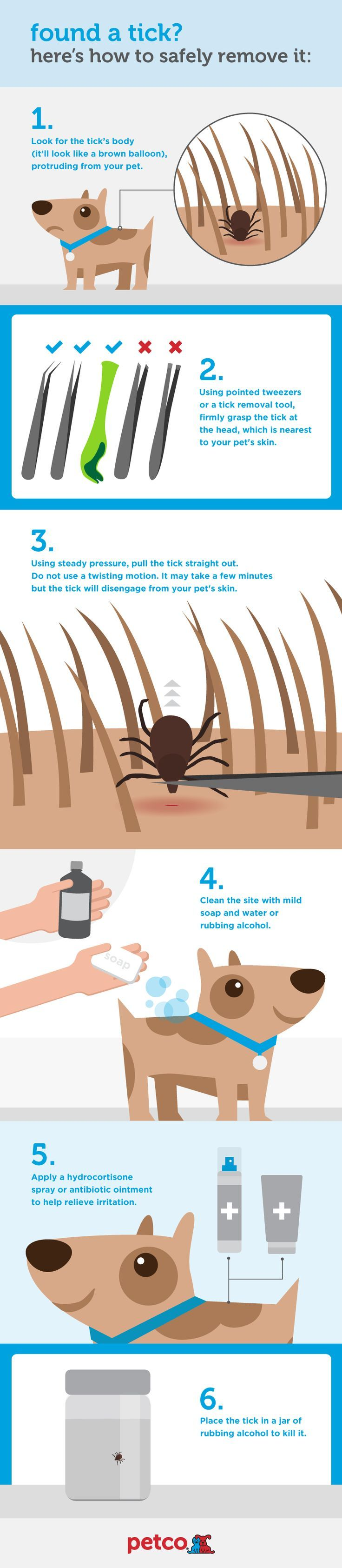 Found a tick on your pug heres the safe way to remove it