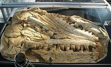 Mosasaurus hoffmannii, De Groene Poort, Boxtel