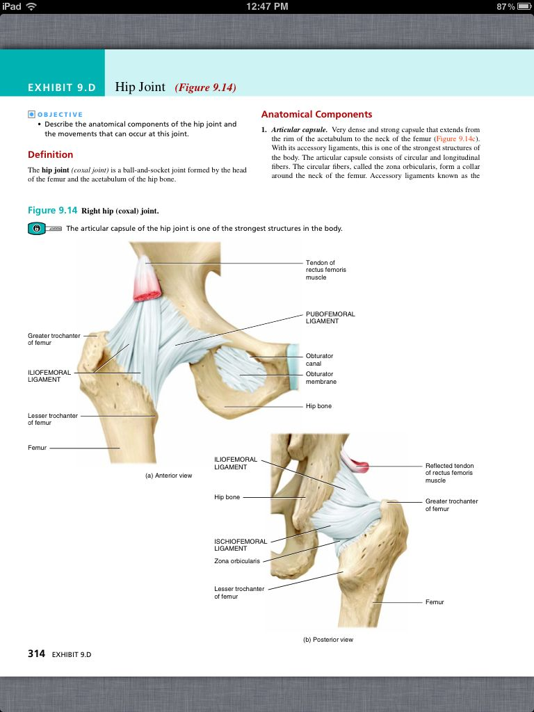 Principles of Anatomy and Physiology, Chapter 9, Joints, 26, book pg ...
