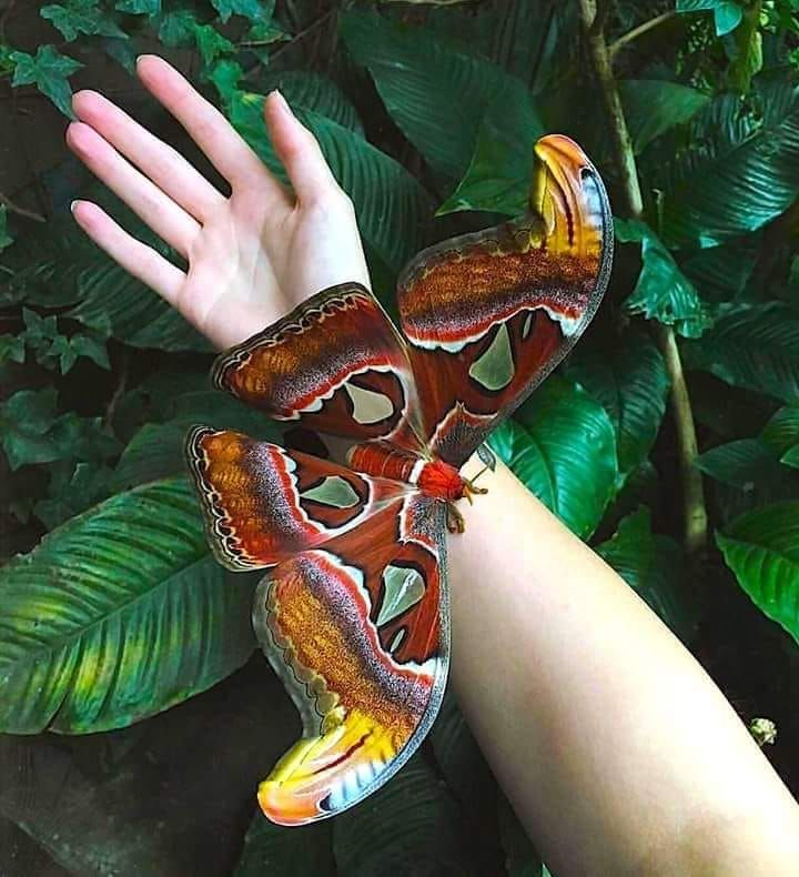 Pin Von Philippin Auf Insekten Schmetterling Schone Schmetterlinge Tiere