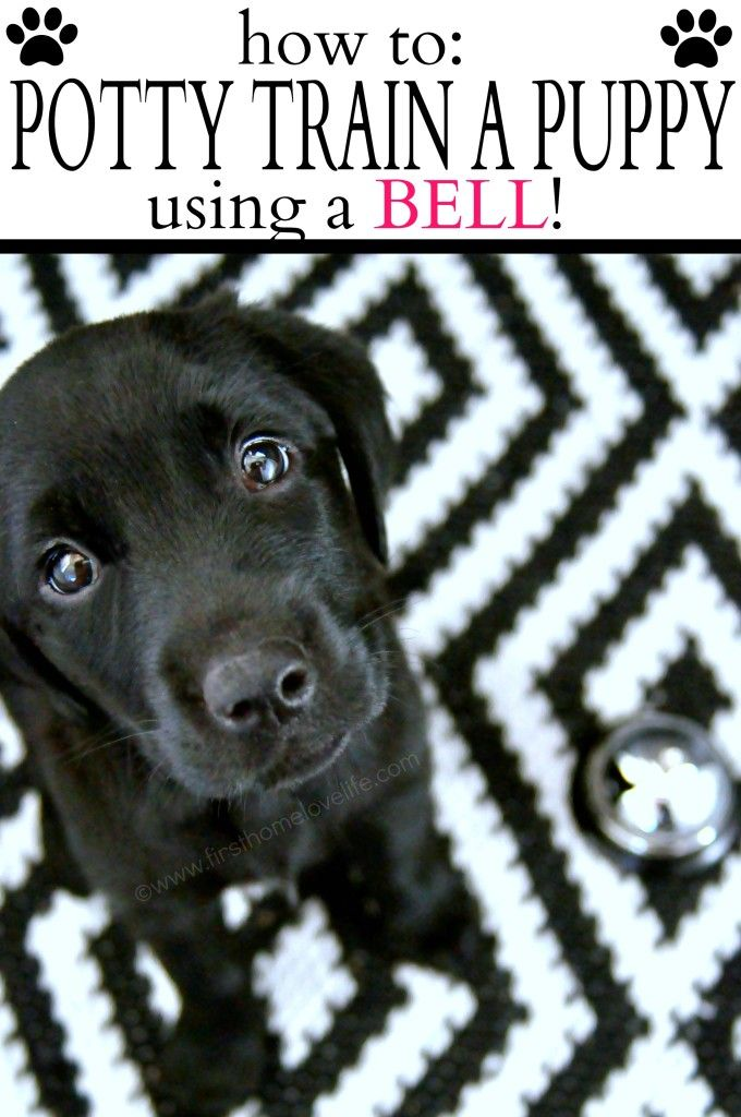Potty Training Puppy Using A Bell Potty Training Puppy Puppy Training Dog Training