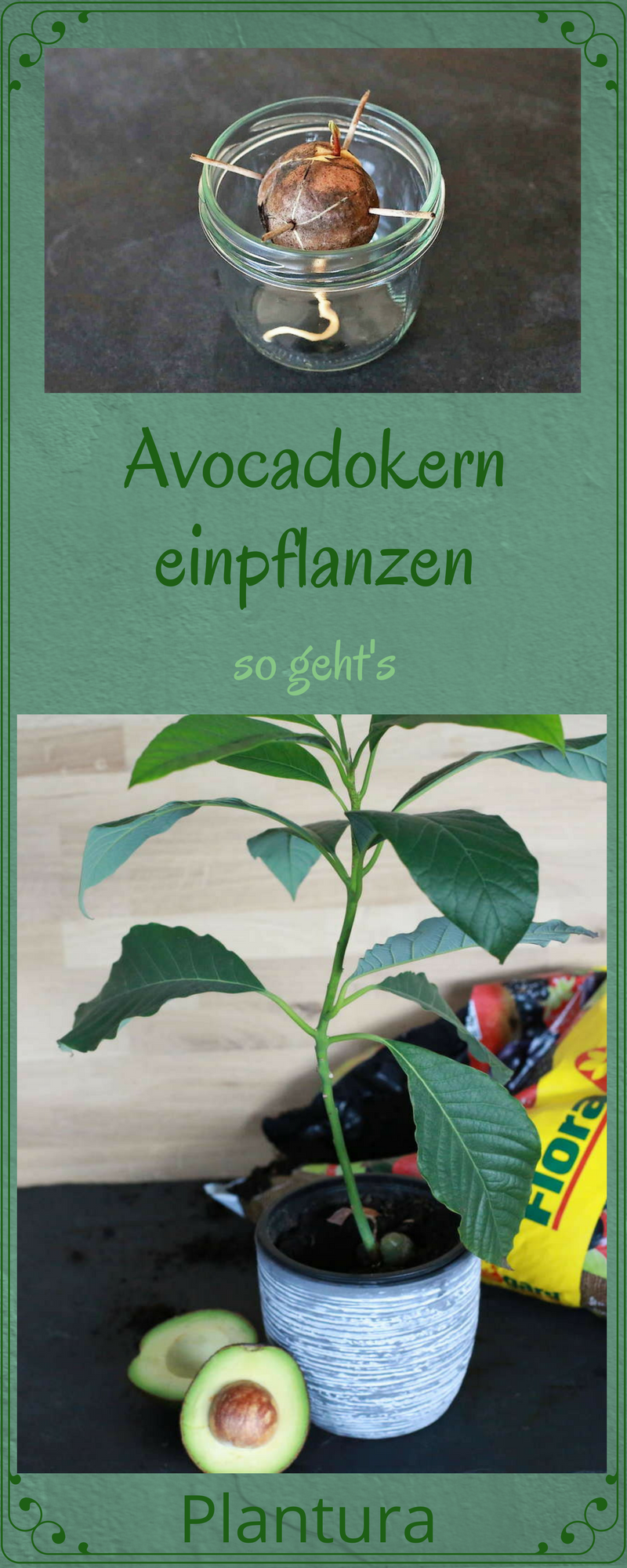 avocadokern einpflanzen vermehrung anbau leichtgemacht beautiful ideas garten pflanzen. Black Bedroom Furniture Sets. Home Design Ideas