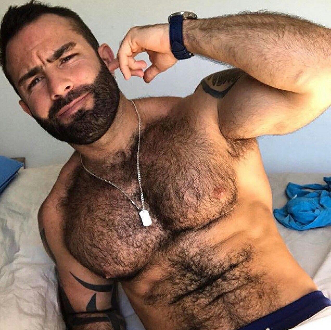 marrón osos gay