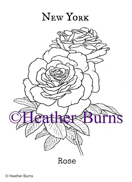 New York State Flower Rose Coloring Books Flower Coloring