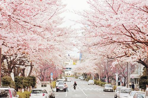 Výsledek obrázku pro spring tokyo tumblr