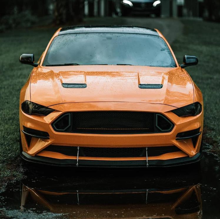 Rate This Mustang 1 to 100 Rate This Mustang 1 to 100