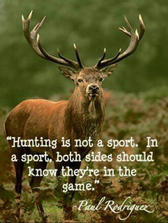 Truth!!!! I understand for people who need and eat the meat....but not for people who just kill innocent animals for a sport...that's just cruel and mean!!!