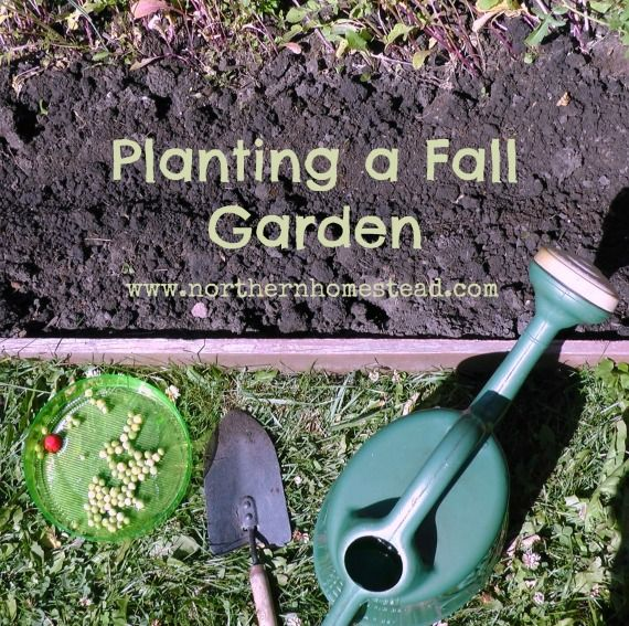 Planting A Fall Garden In A Northern Climate
