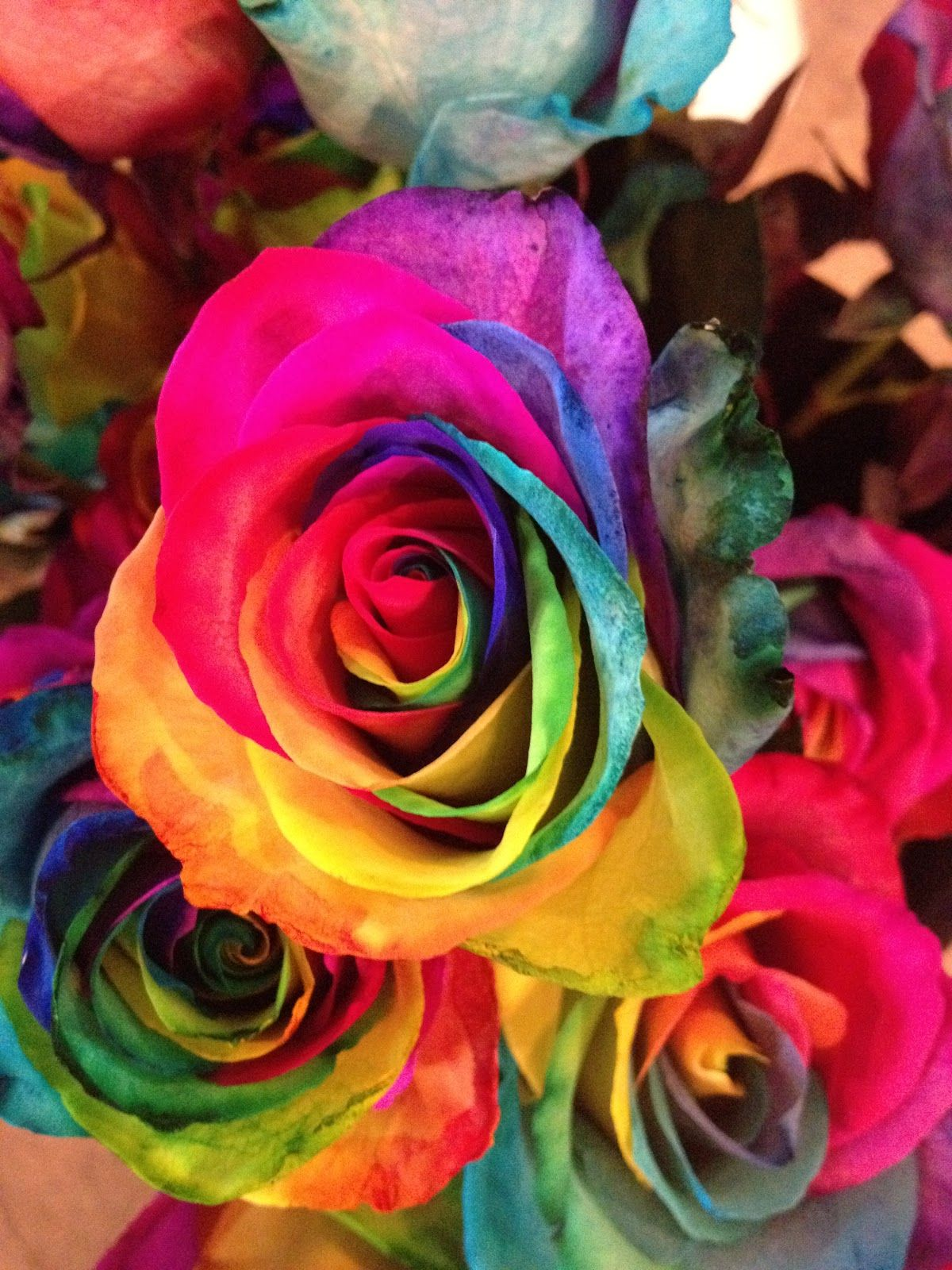 Image gallery neon rainbow roses for Rainbow dyed roses