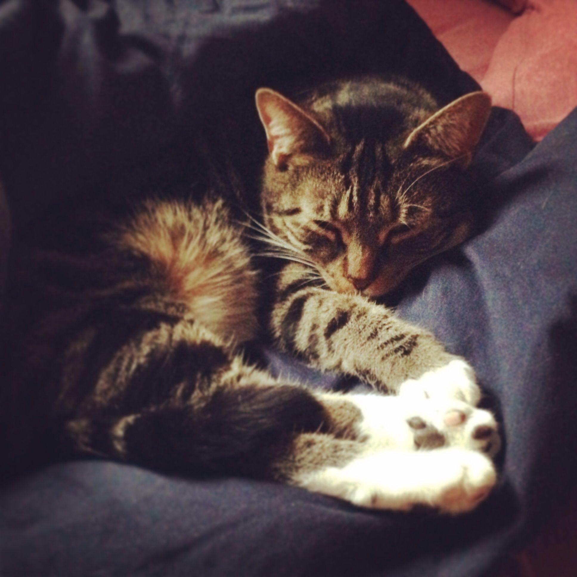 Snuggly Sally