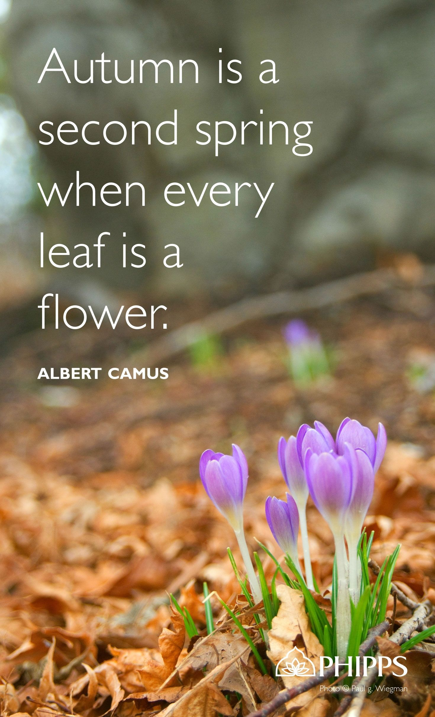 A quote for the day and a beautiful photo from our gardens. Photo ...
