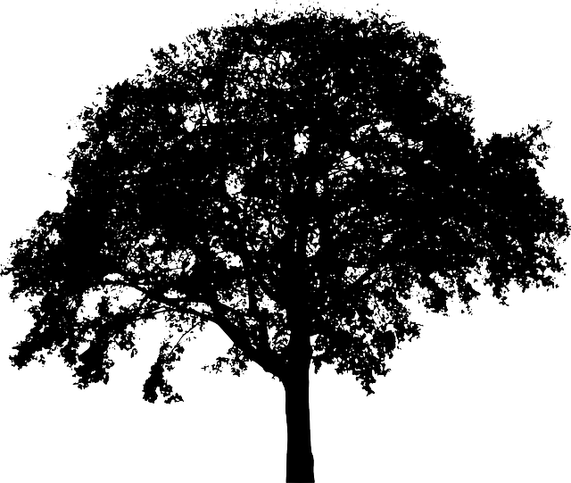 Free Image On Pixabay Tree Bush Nature Leaves Trunk Tree Silhouette Silhouette Vector Landscape Silhouette