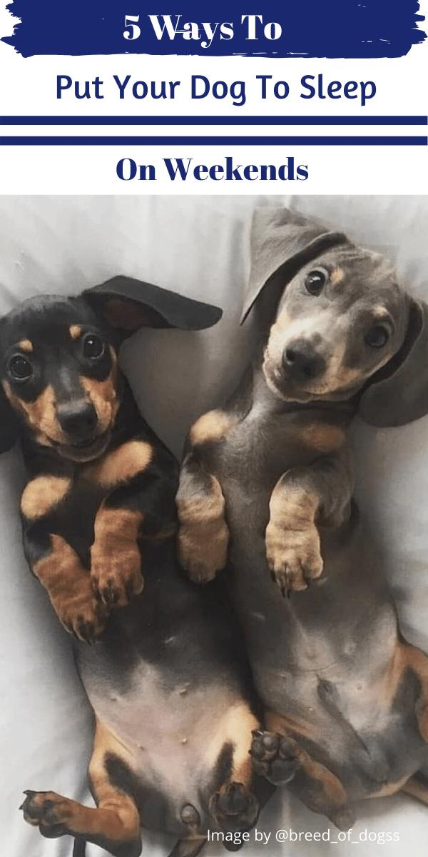 Pin on Dog Sleep
