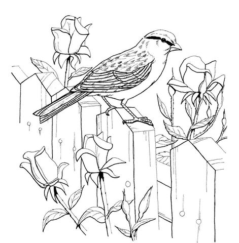 Chipping Sparrow And Roses Coloring Page