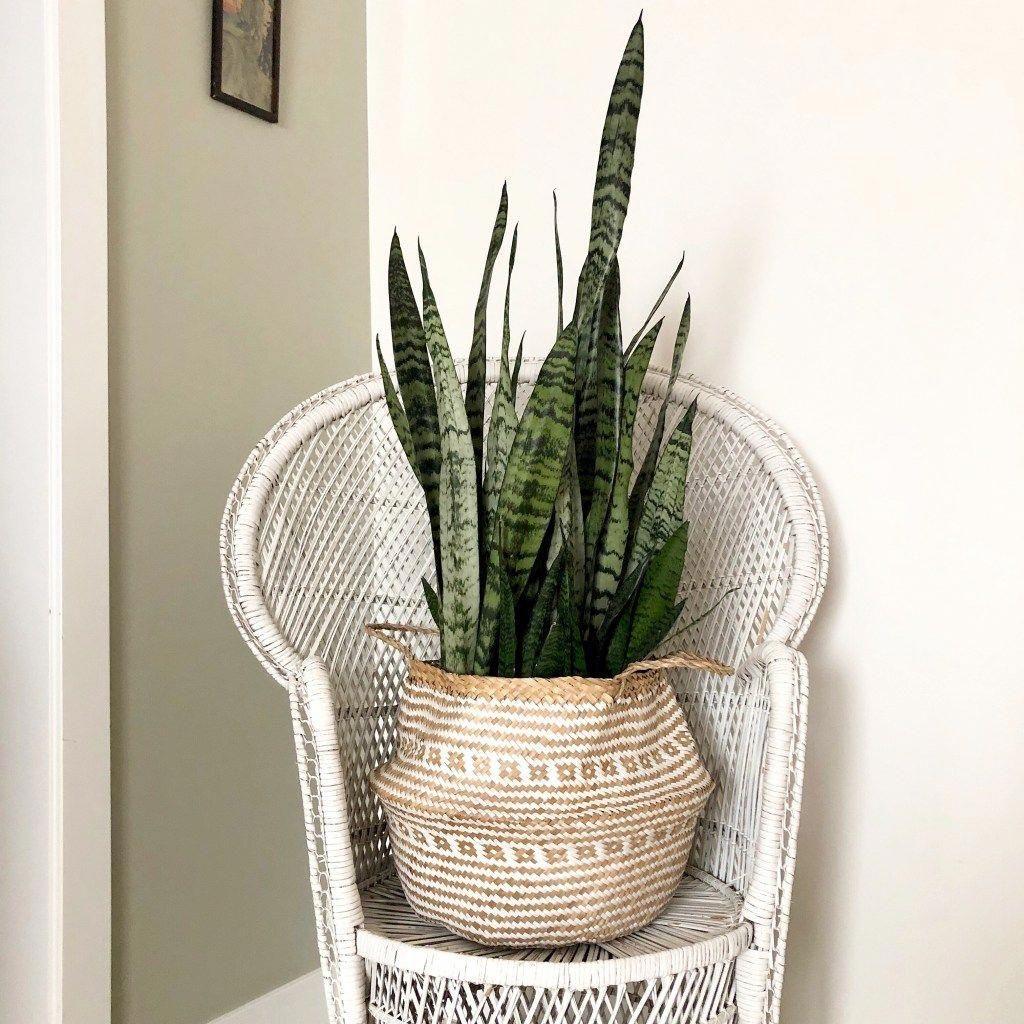 10 Best Low Maintenance Indoor Plants My Tasteful Space