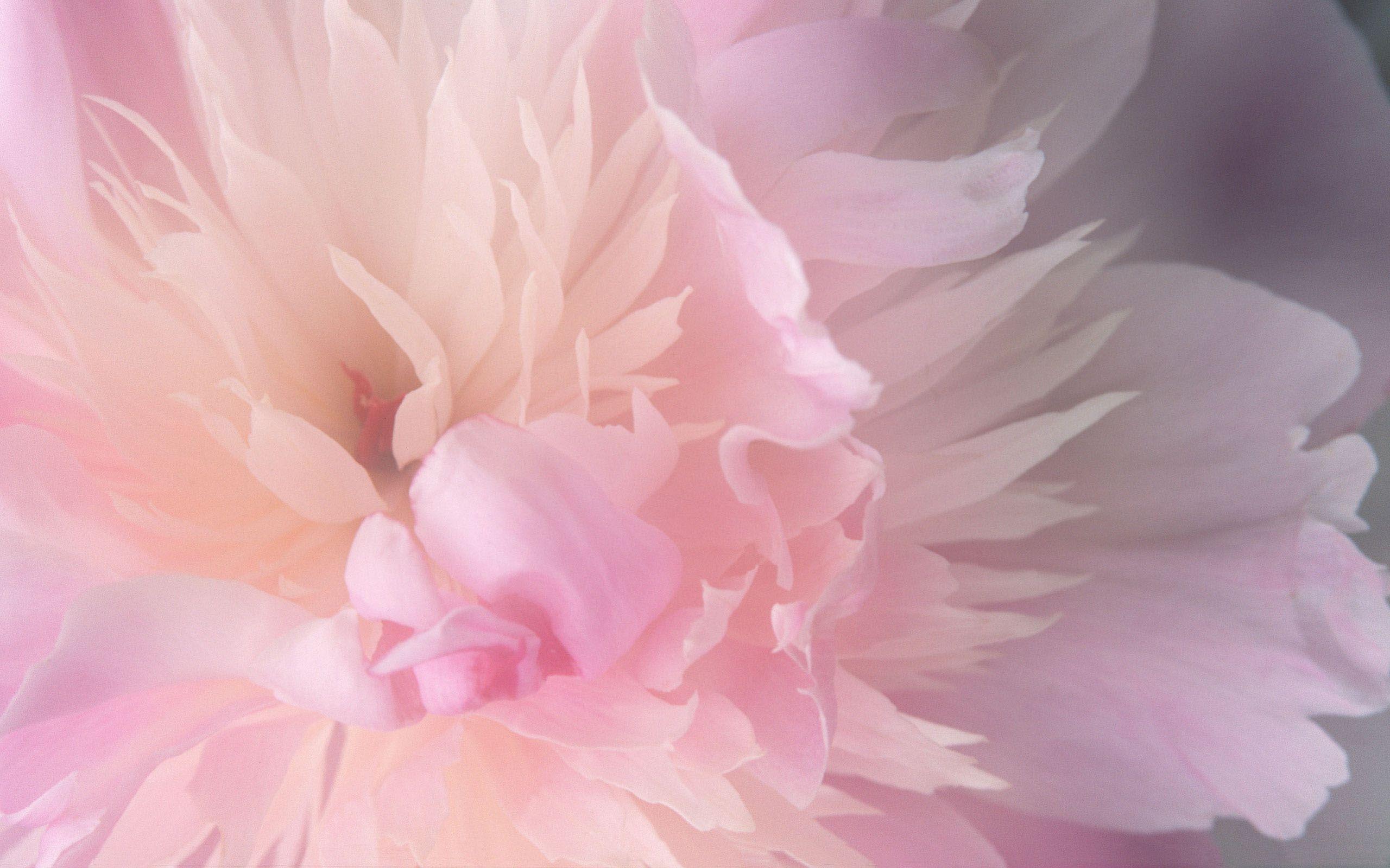 Download abstract mac desktop flower pictures wallpaper - Flower wallpaper macbook ...