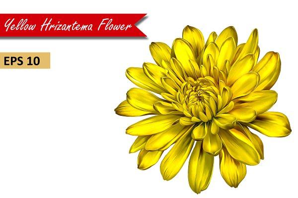 Yellow Chrysanthemum Flower Vector Yellow Chrysanthemum Chrysanthemum Flower Chrysanthemum