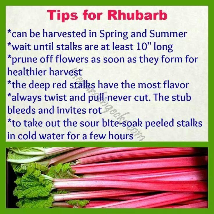 Rhubarb, Growing Rhubarb, Veggie Garden