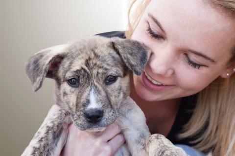 Adopt A Pet At National Adoption Weekend Sept 11 13 Pet Adoption Event Pets Pet Adoption