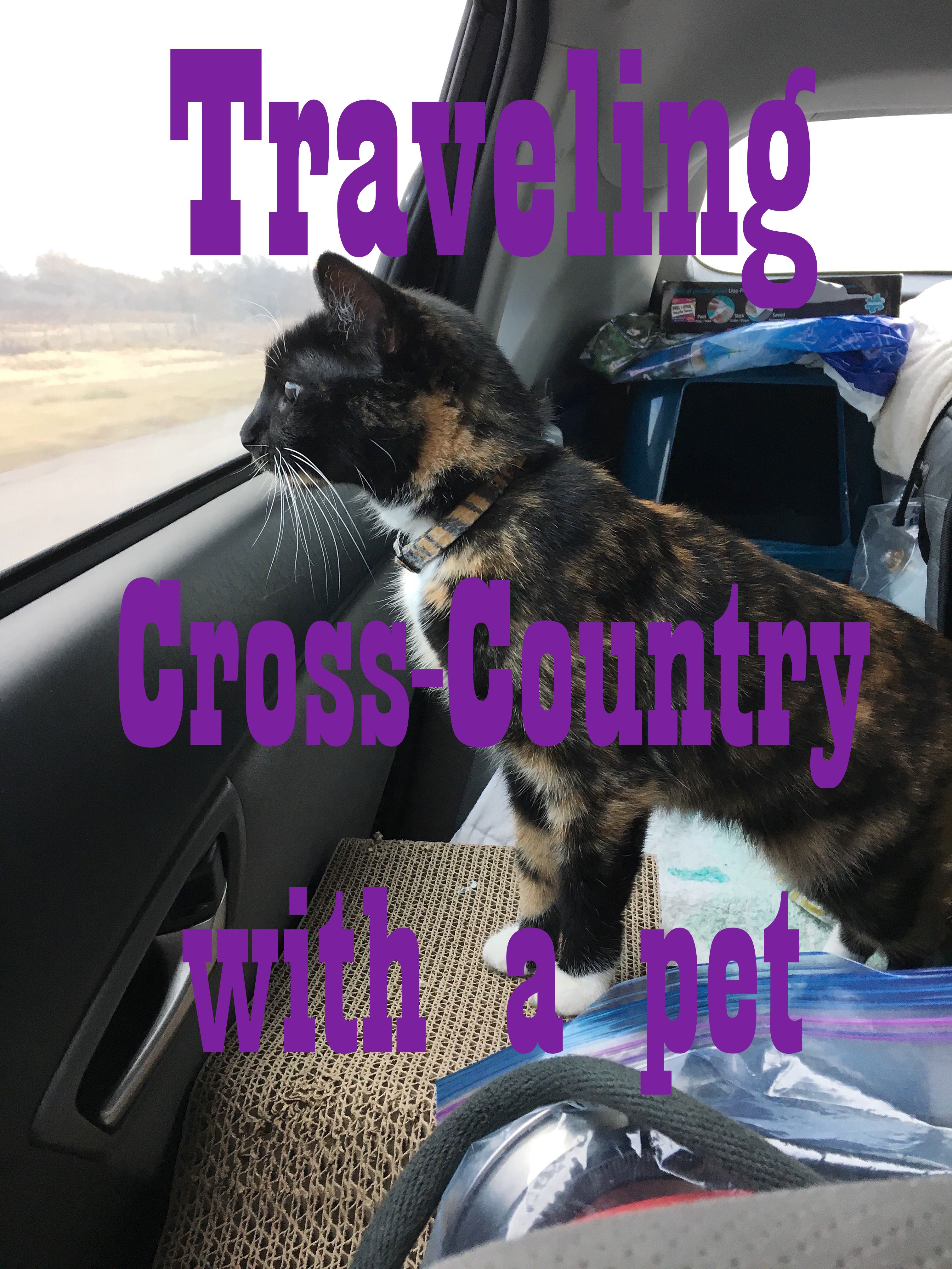 Traveling Cross Country With A Cat Cat Travel Dog Travel Pet Travel